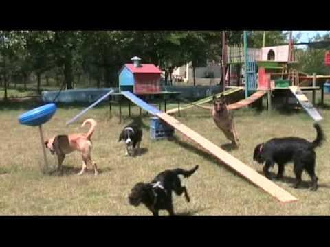 Parco giochi Melampo 1 - Addestramento cani a Cagliari