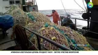 Средний рыболовный траулер морозильный типа ягры проект 50010
