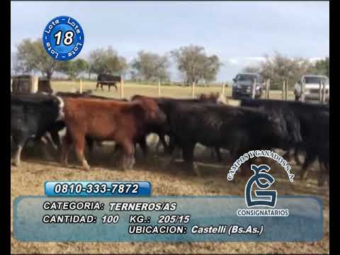 Lote M Y H - Castelli  Bs As
