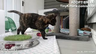 Help Salia find a home!  TinyKittens.com/adopt