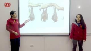 [WSI] I3.1 Nhã Bình - Tâm Nhi - Presentation lv2