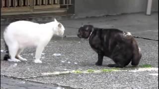 Коты дерутся. Бои без правил. Жесть!