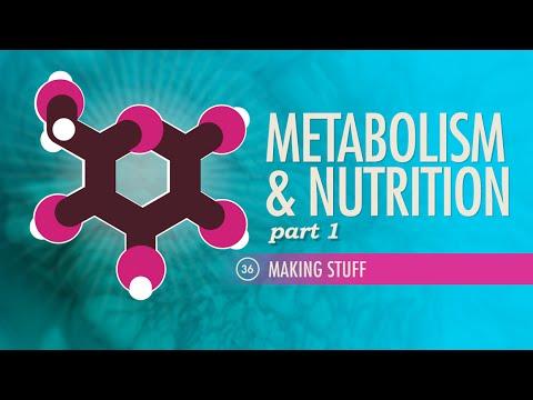 Metabolism & Nutrition, part 1: Crash Course A&P #36