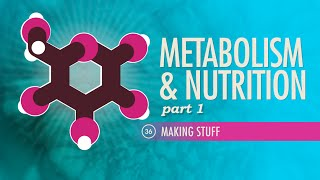 Crash Course - Metabolism & Nutrition, Part 1: Crash Course A&P #36
