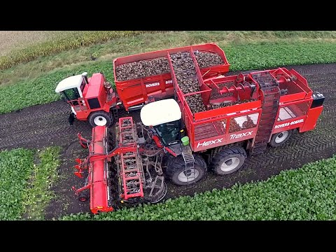 12 row Sugarbeet harvesting   Rovers Boekel l Holmer / Agrifac Hexx Traxx 12   Gilles overlaadwagen