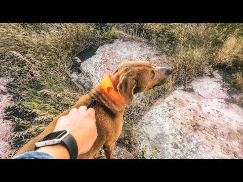 The Release N Run Leash/Collar By Rad Dog [Review]