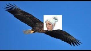 Jett is a Bird