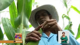 Impulsa Cuba Programa de Soberanía Alimentaria y Nutricional