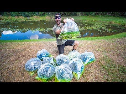Stocking Pond With 2,500 JUMBO WILD Shiners!! (big bass feeding)
