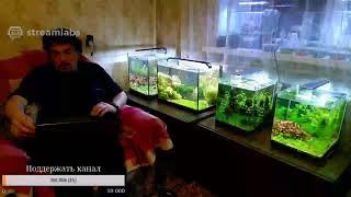 Удобрения в аквариуме и не только. Ненаучный стрим.