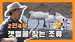 [국립생태원]생태교육 2편 4부_갯벌을 찾는 조류