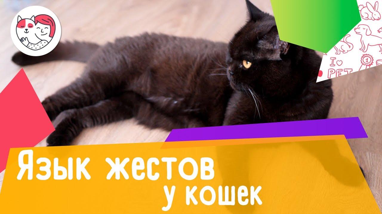 Язык кошачьих жестов: как определить настроение кошки