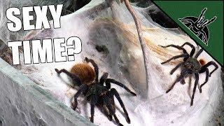 Tarantula LOVE LIFE STRUGGLE continues...