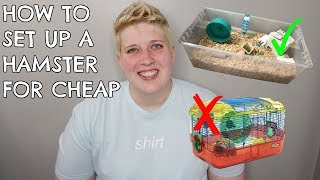 HOW TO SET UP A HAMSTER CAGE ON A BUDGET