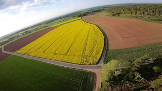 FPV Racer over canola field #2