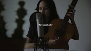 haley heynderickx - the bug collector (tiny desk contest 2017)