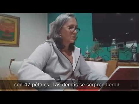 Watch video Breve cuento del libro Yo Soy Galo para explicar el síndrome de Down
