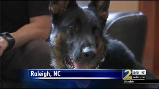Private Drug Dogs Allow Parents To Search Rooms