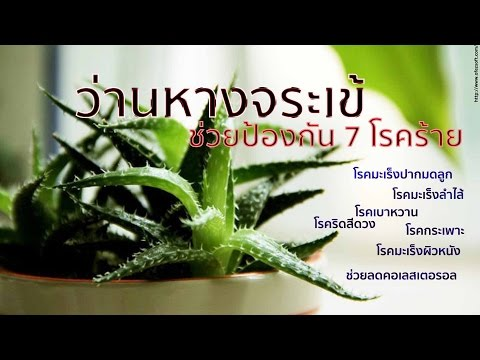 พืชปรสิต 4 ตัวอย่าง