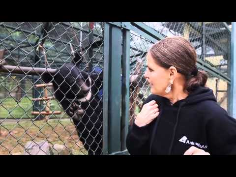 Ali MacGraw Joins Eviction Fight<br>as Part of New Animals Asia Role
