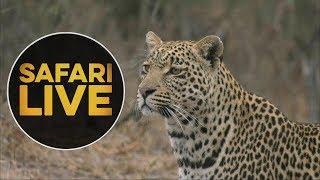 safariLIVE - Sunset Safari - August 9, 2018