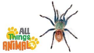SPIDERS: Animals for children. Kids videos. Kindergarten | Preschool learning | Kholo.pk