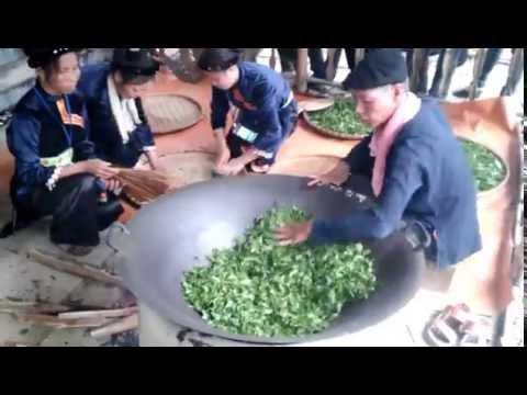 Quy trình chế biến chè Thái Nguyên theo cách truyền thống