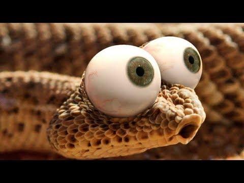К чему снятся ЗМЕИ? (2019) СОННИК Змеи к чему снятся?