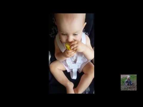Малые разборки с кукурузой / Small disassembly with corn