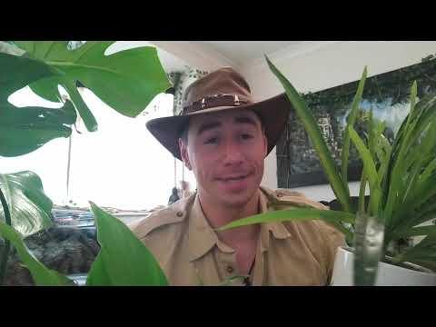Gapforce | Online Leadership Course - YouTube