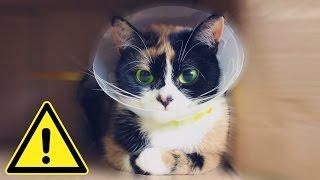 Почему КУКИ в ОПАСНОСТИ?! ОН УМЕР?! | СЛИВКИ ШОУ #КукиЖив
