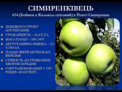 Чеканова ирина астролог отзывы