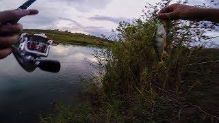 Рыбалка в ставропольском крае на голубом канале