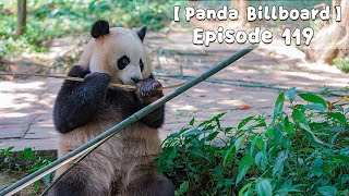 【Panda Billboard】 Episode 119 | iPanda