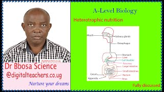 Heterotrophic nutrition A level By Dr  Bbosa Science