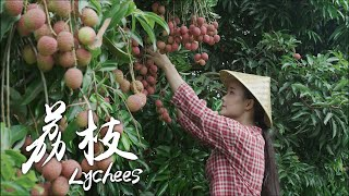One Fruit for A Table - Lychees grown alongside the banks of Salween River