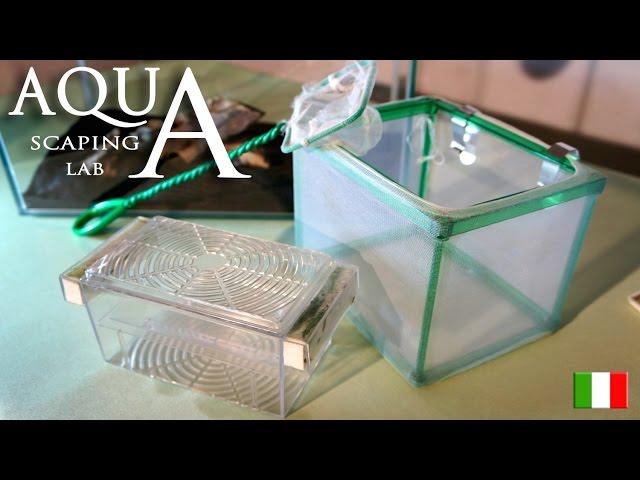 Aquascaping Lab - Allevamento avannotti e tipologie di nursery (sala parto e nursey esterna)