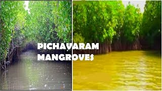 Pichavaram Backwater near Chidambaram