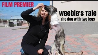 AMAZING TWO LEGGED DOG! - Weeble who lost his legs but now runs on two
