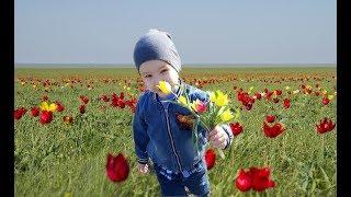 Как мы ездили за степными тюльпанами. Влог.
