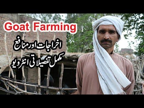 Actual Profit In Goat Farming In Hindi Part 1 - смотреть