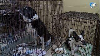 Благотворительный фонд «Спасение» выиграл контракт на отлов бездомных животных