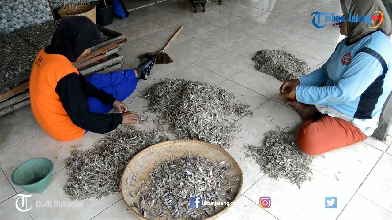 Musim Ikan, Harga Ikan Teri di Pekalongan Mengalami ...