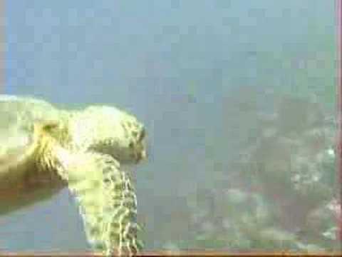 Schildkröte, Falfulea,Hurghada,Ägypten