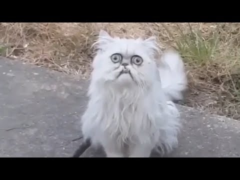 Weird-looking cat Wilfred goes viral with Michael Rapaport voiceover