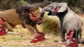 Most Amazing Wild Animal Attacks - Lion, Tiger, Anaconda, Deer, Crocodile, Rhino, Elephant, Ostrich