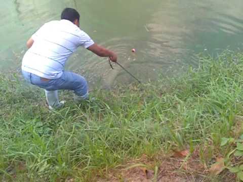 Marine parasito sa mga larawan isda