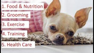 Chihuahua 101 - Feeding, Grooming, Training & Health Care of Chihuahua