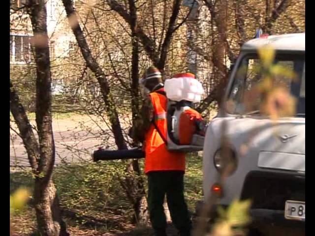 Деревья обработают химикатами от яблоневой моли