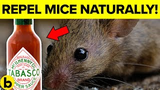 7 Ways To Get Rid Of Mice Permanently And Naturally
